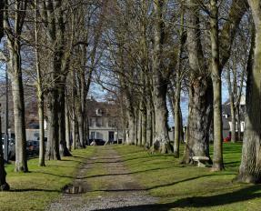 Tilleuls le long de la place de Gaulle à Bayeux © Stéphane Maurice