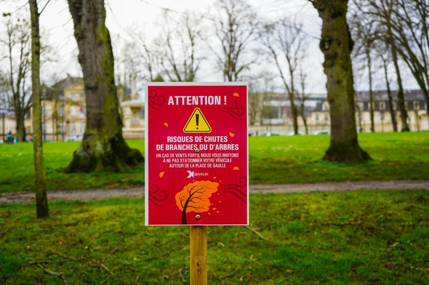 Tilleuls place de Gaulle à Bayeux